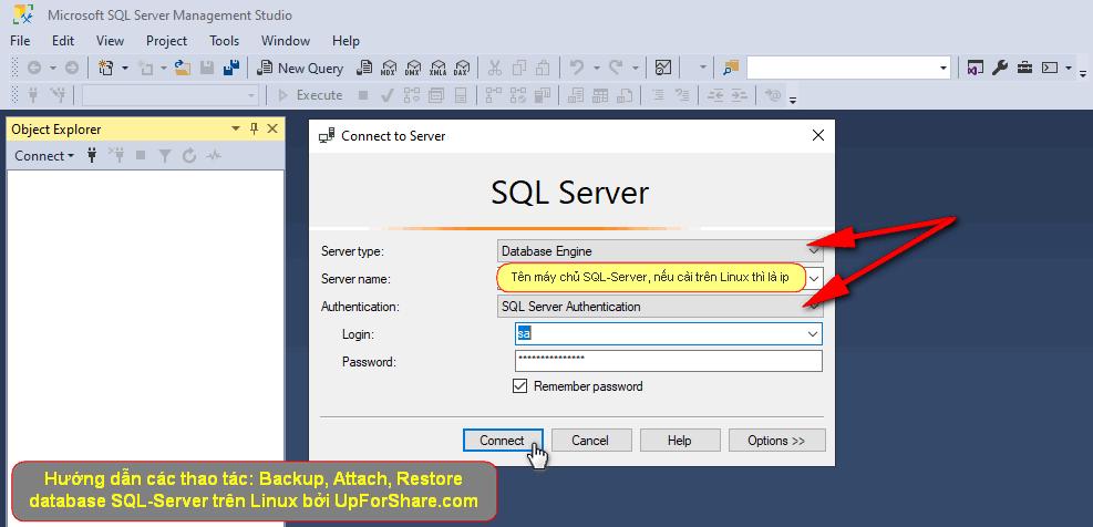 SQL-Server-Management-Studio-Linux